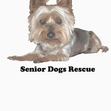 Senior Silkie by SeniorDogs