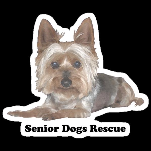 Senior Silkie by SeniorDogs