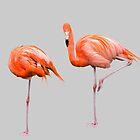 Flamingos  Grey by Jim Key