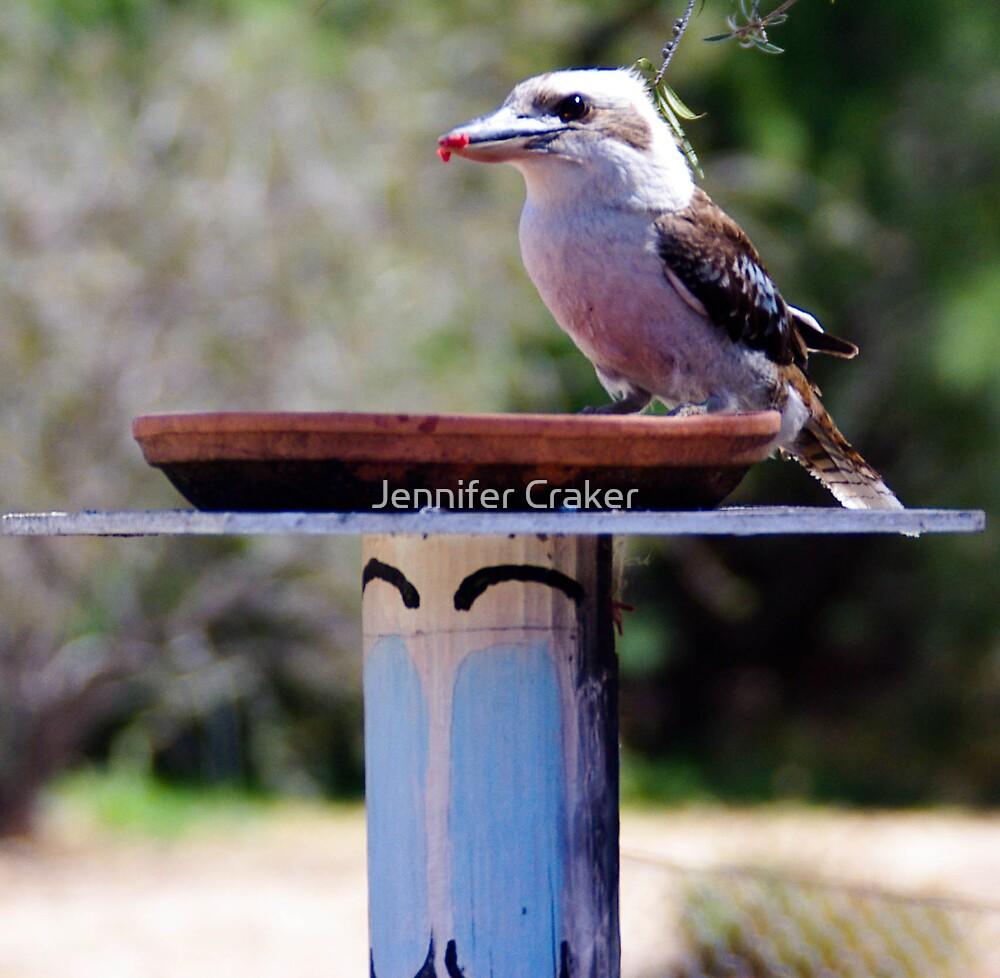 Kookaburra in for a feed by Jennifer Craker