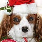 Noah the Christmas Dog by Samantha Cole-Surjan
