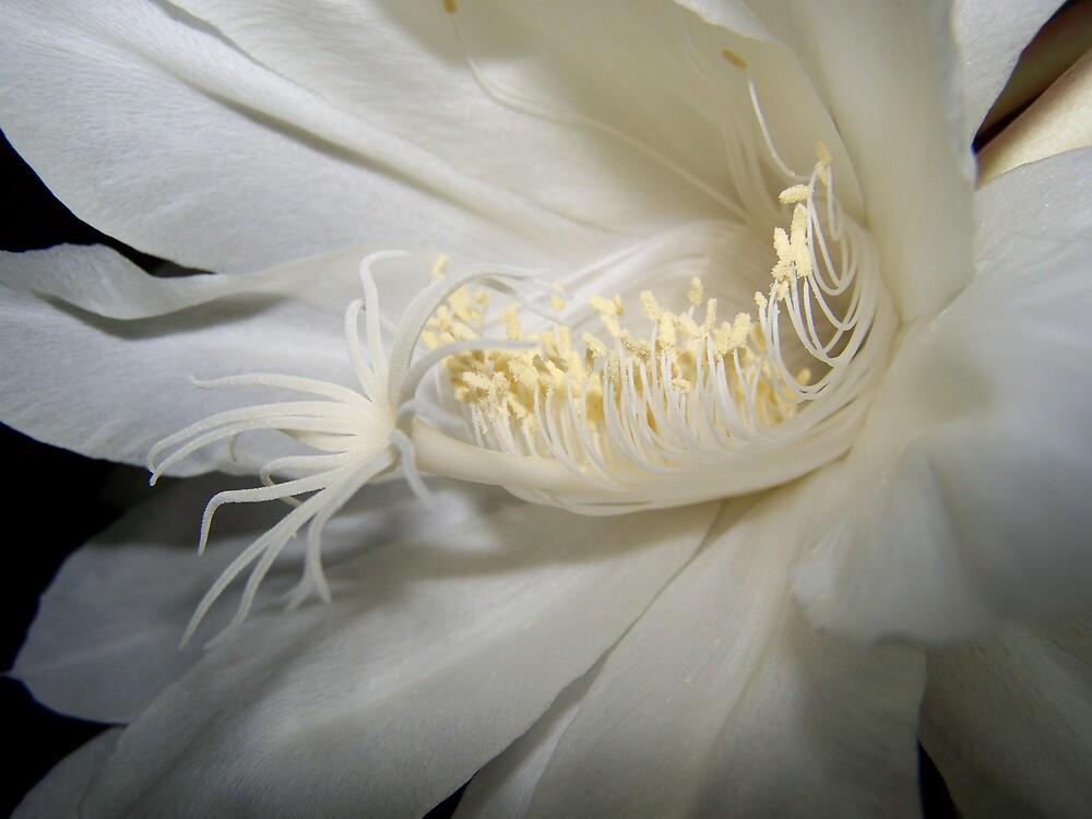 Moon Flower by Daniel Rayfield