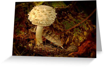 Autumn Fungi by Gazart