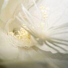 Moon Flower #2 by Daniel Rayfield
