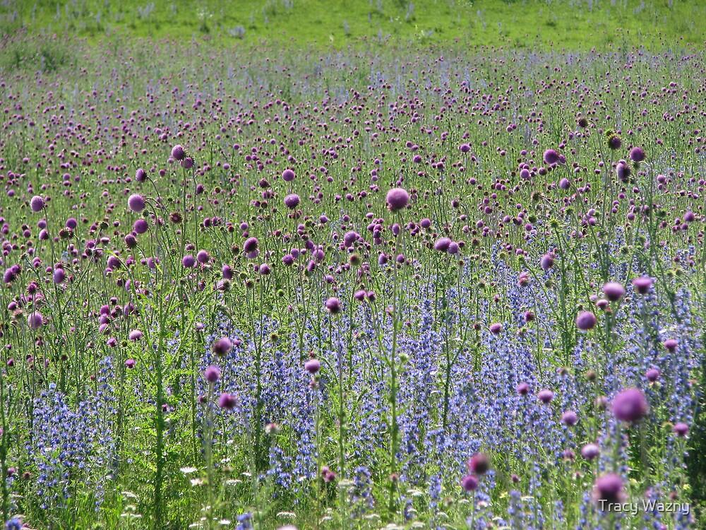Wildflowers  by Tracy Wazny