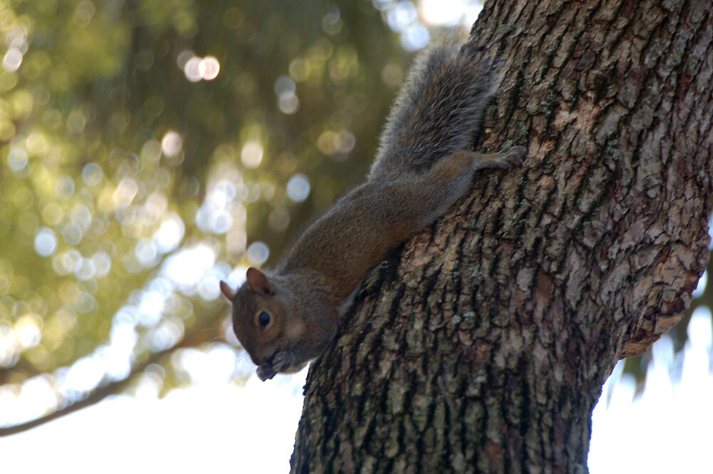 Squirrel at Craigs Park by FloridaWorld