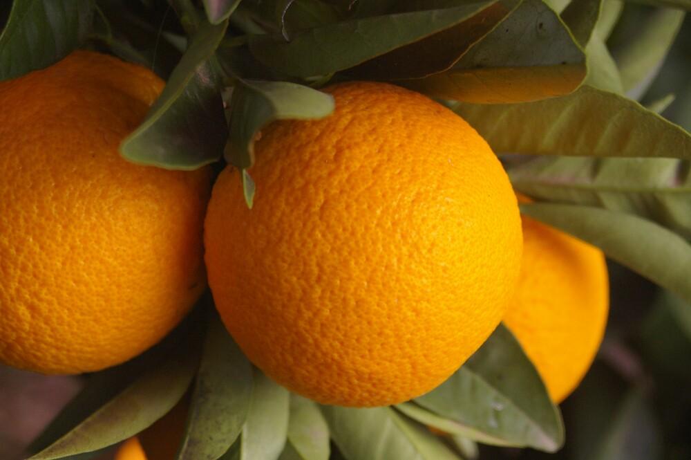 Oranges by janfoster