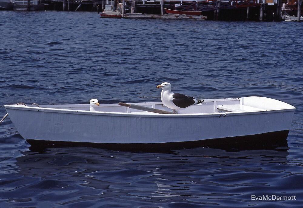 Sunday Boating Boothbay Harbor by EvaMcDermott