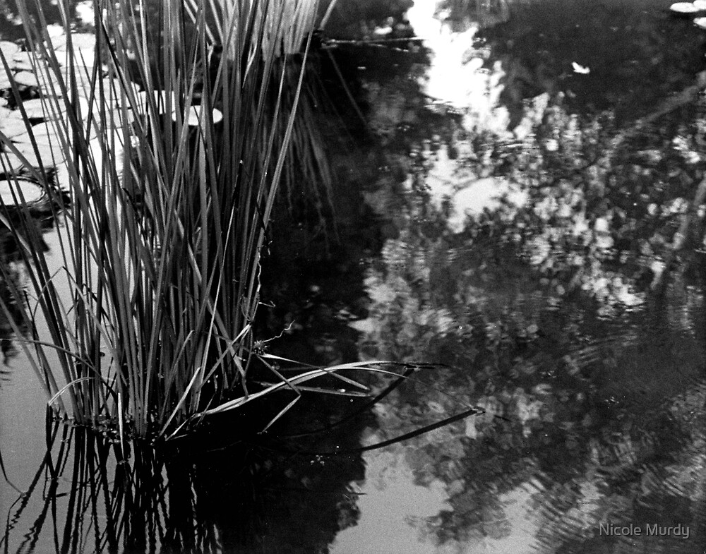 Pond by Nicole Murdy