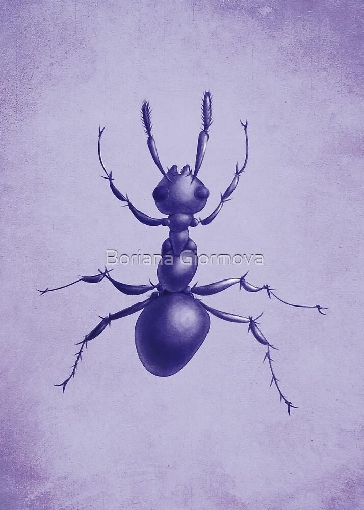 Ant drawing in purple, art print at Redbubble