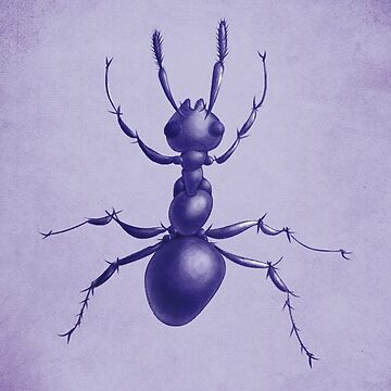 Purple Ant by azzza