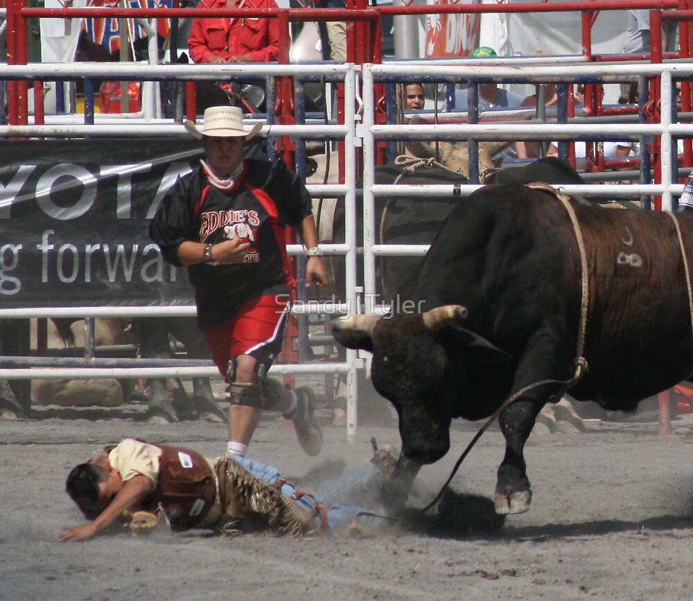 Bull Rider hits the ground.  by Sandy  Tyler