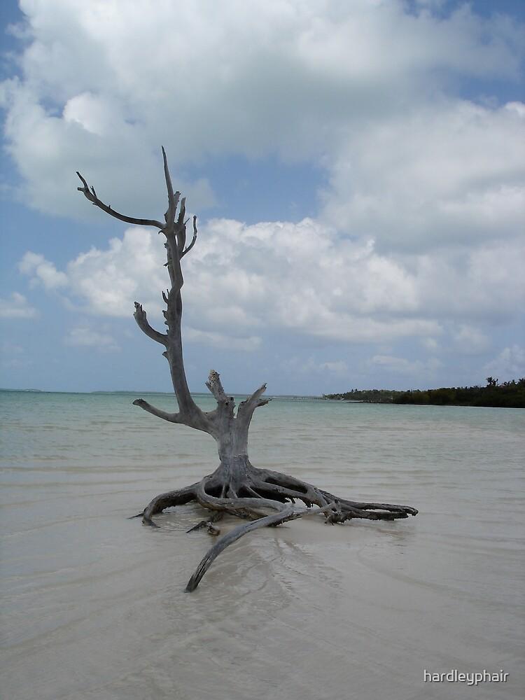driftwood tree at harbor island bahamas by hardleyphair