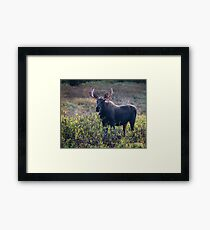 Moose Mess Framed Print