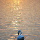 Swan Towards Sunset by Mark Greenwood