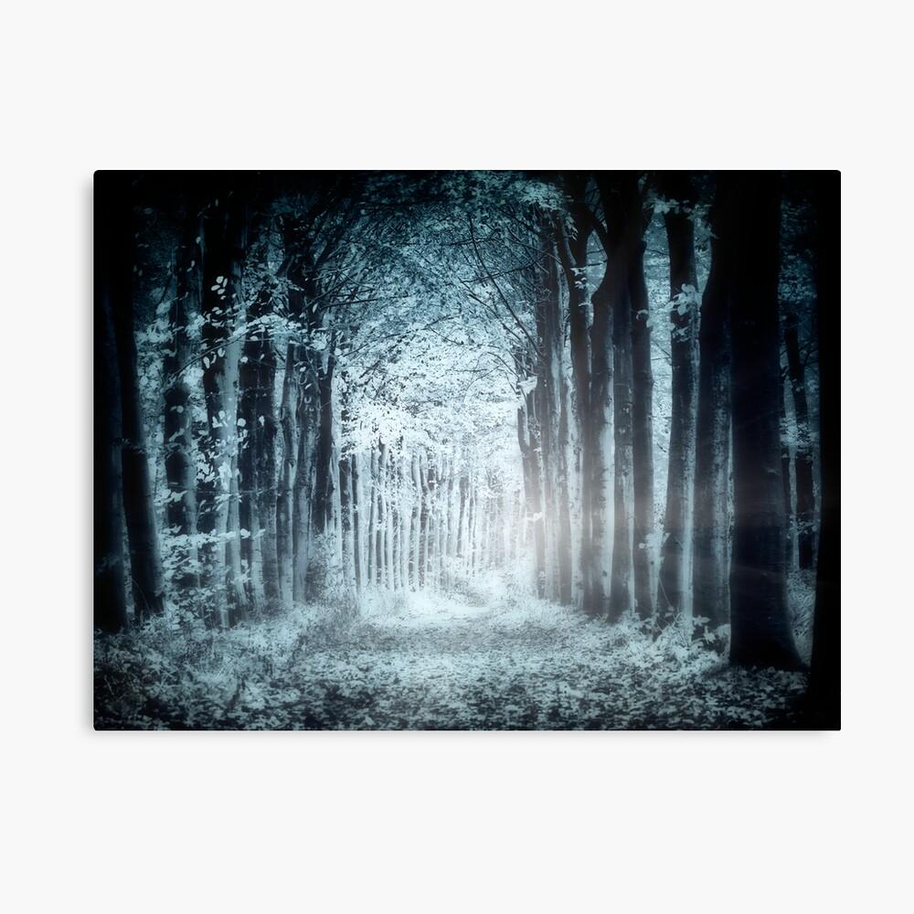 Night, Woods Canvas Print