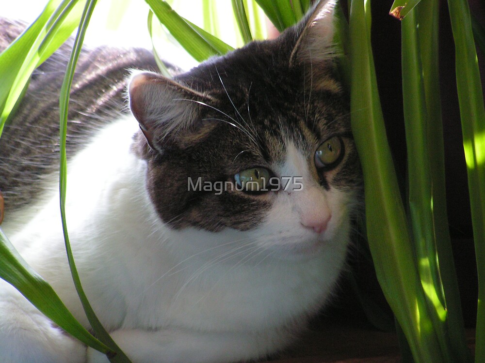 Max the Manx by Magnum1975
