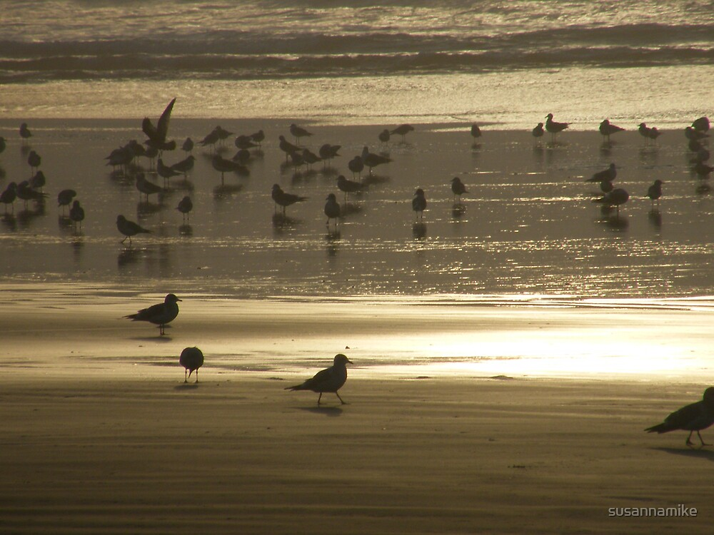 Birds on Pacific Coast by susannamike