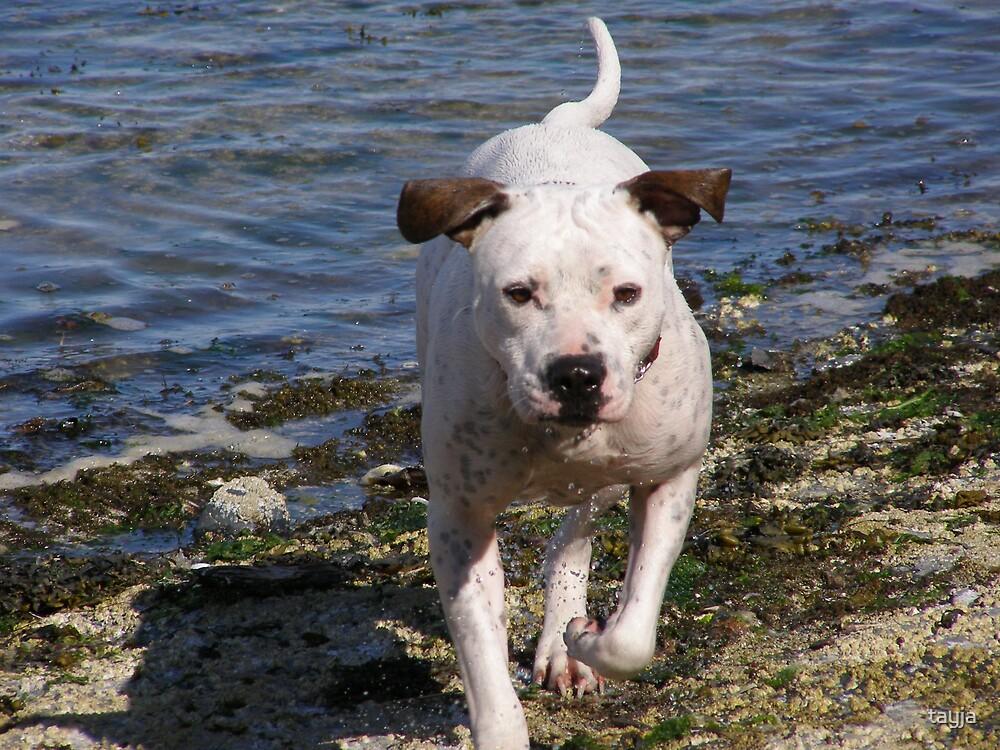 Cuba Dog by tayja