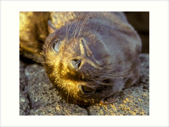 Galapagos Newborn Sea Lion by Dan Sweeney