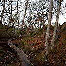 A woodland pathway in Gothenburg's Botanical Garden by 71featherst
