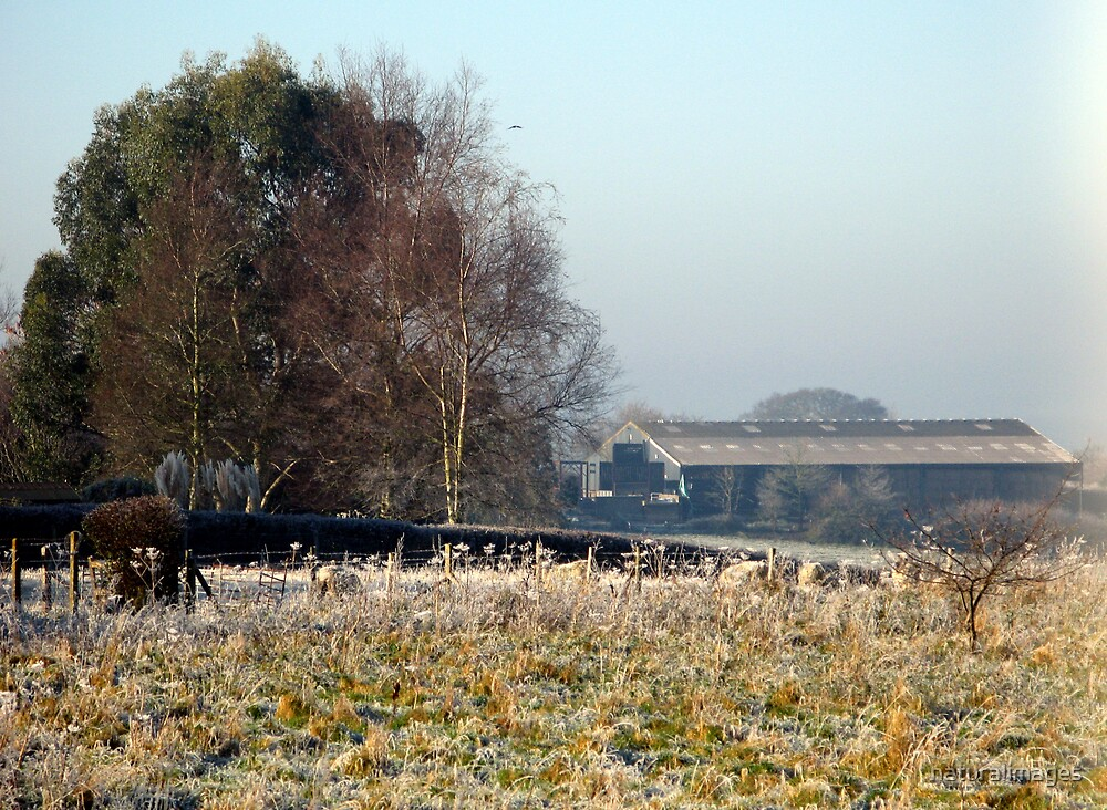 Frosty field by naturalimages