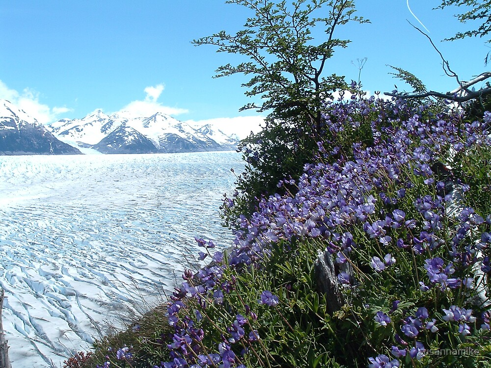 Purple Glacier Flowers by susannamike