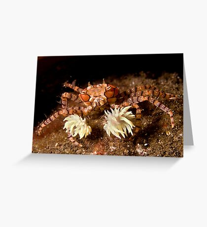 Boxer Crab Greeting Card
