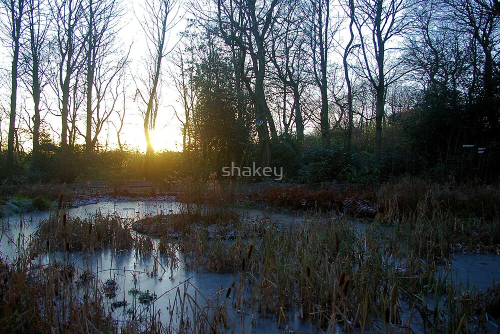 Frozen solid by shakey