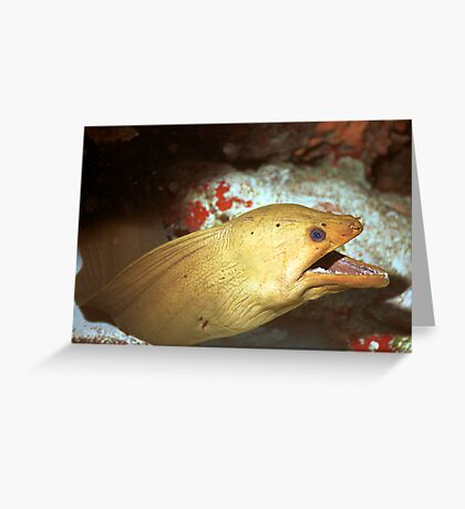 Green Moray Greeting Card