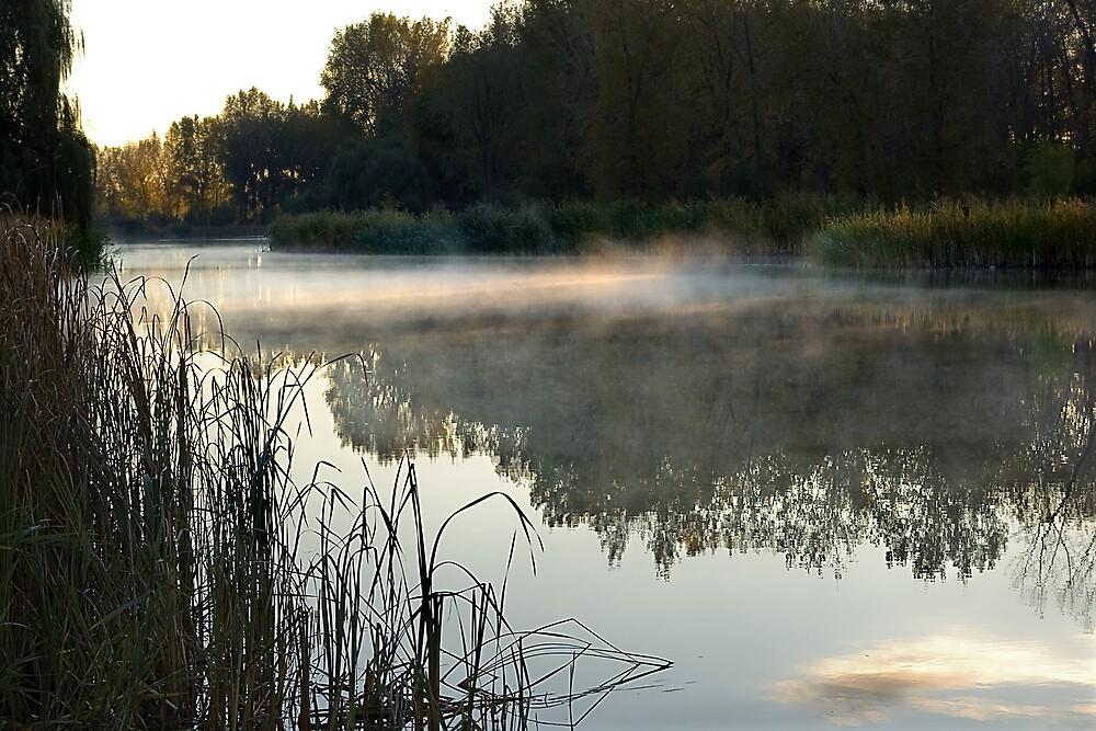 Morning Mist  3 by Pierre L