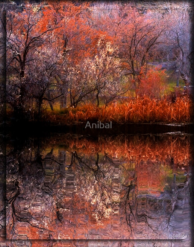 Reflect by Anibal