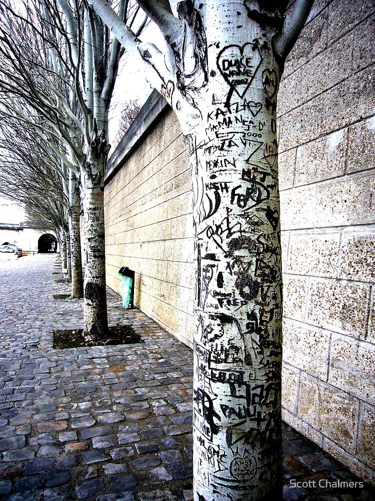 Graffiti Trees by Scott Chalmers