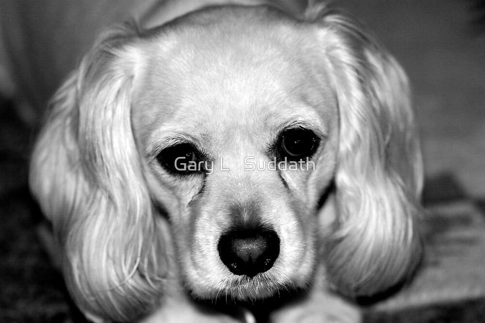 Sad Eyes by Gary L   Suddath