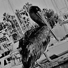 Pelicano by sarahkate