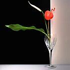 Glass & Flowers by andreisky