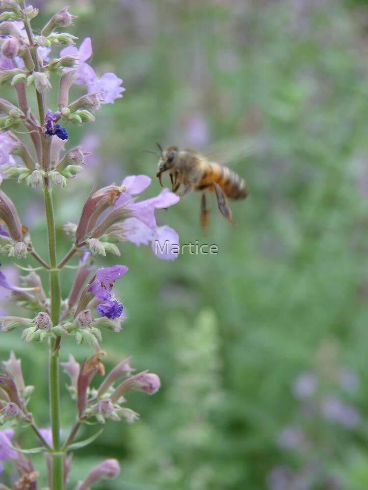 Bee & Lavender by Martice