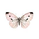 Butterfly flutter - soft peach by peggieprints