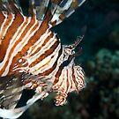 Lionfish by Andrew Trevor-Jones