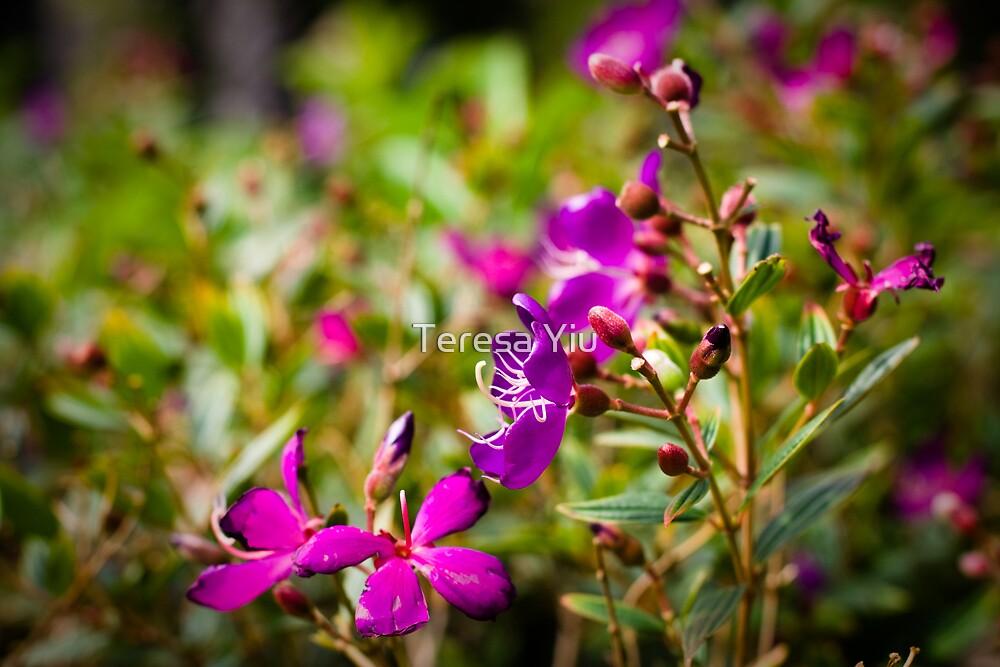 Blooming Purple by Teresa Yiu