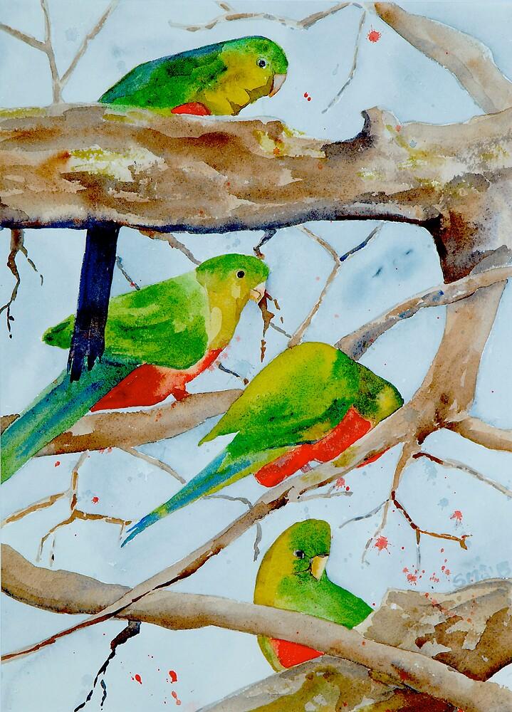 King Parrots by Susie a'Beckett