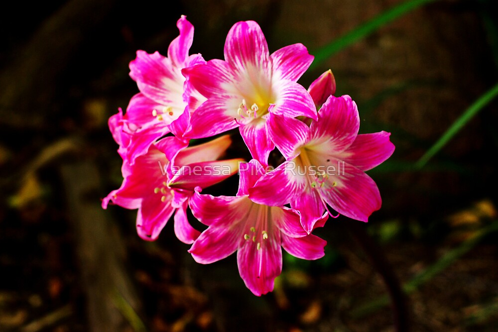 Flowers: Pink by Vanessa Pike-Russell