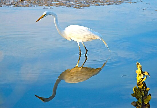 Reflections of the Egret by TJ Baccari Photography
