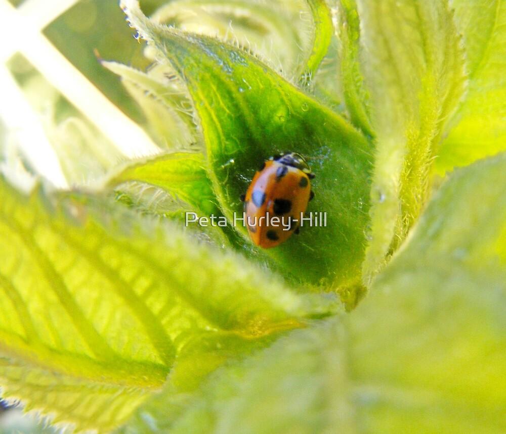 bug by Peta Hurley-Hill