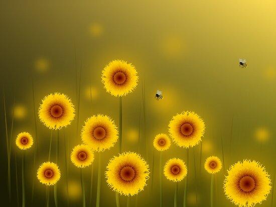 Sunflower Field by franzi