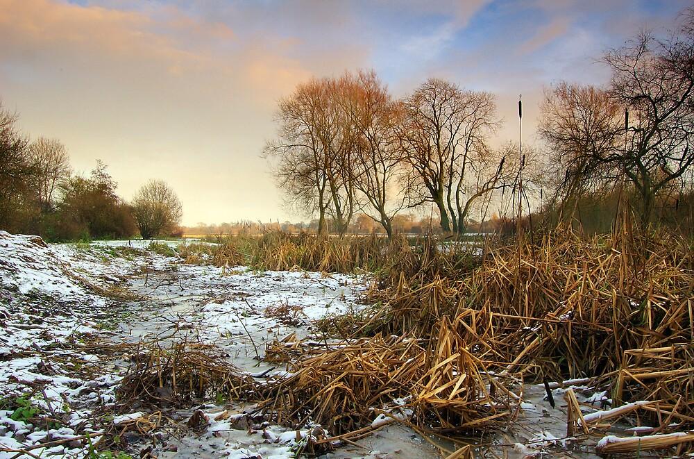 Frozen by Andrew Leighton