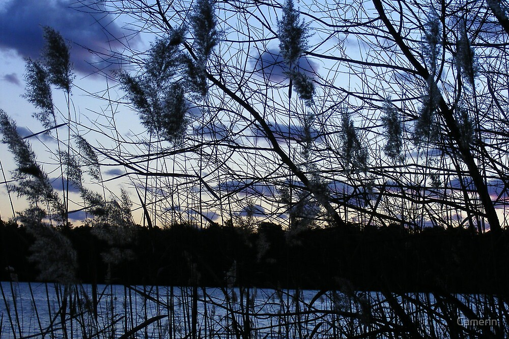WINTER SKY by Camerin