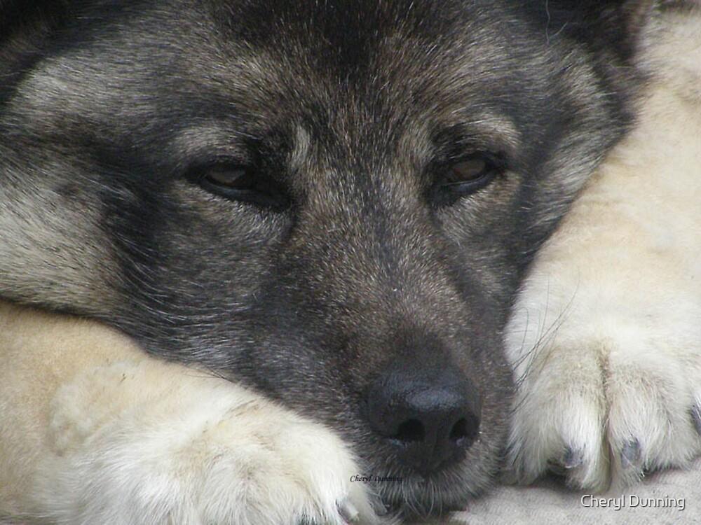 sad puppy by Cheryl Dunning