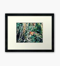 Monarch at Mulberry Bend Framed Print