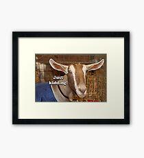 Just kidding!: happy smiling goat Framed Print
